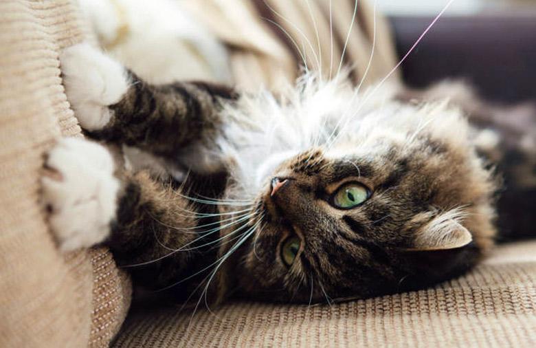tela-mascotas-pretenciosa-gatos.jpg