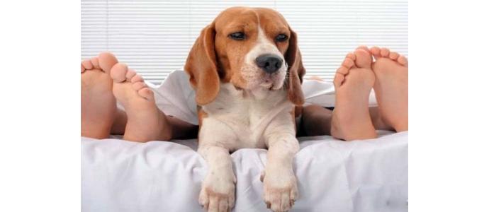 ¿Dormir con tu mascota?